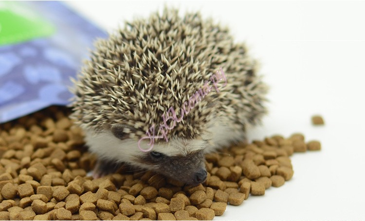 Корм для африканских ежей Premium Hedgehog Food 450гр вид 3