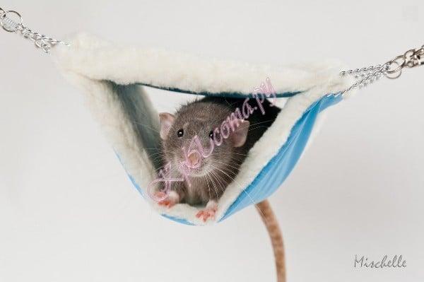 Как сделать гамак крысе фото