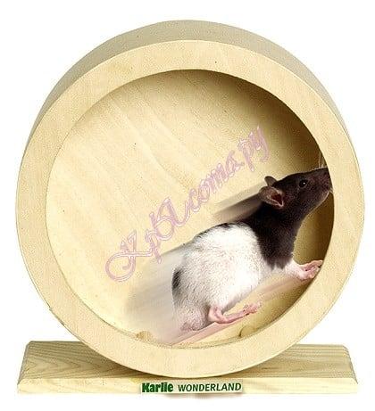 Деревянная клетка для крысы