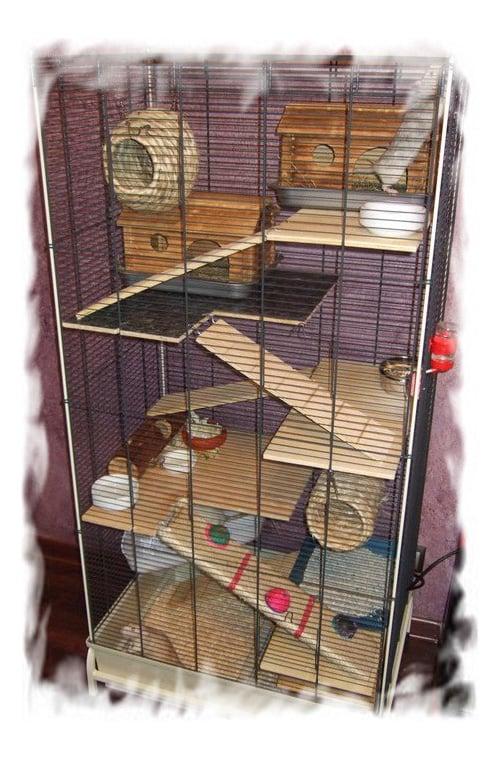 Лазалки для крыс своими руками 43